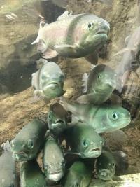 Aquarium03_20190911095401